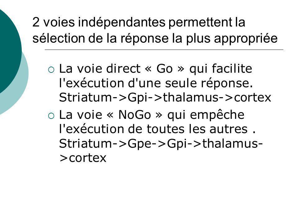 Ancien modèle de réponse Striatum Go No Go GPiGPe - - + = excitation- = inhibition - Thalamus Réponse motrice corticale désinhibe + Libère linhibition tonique du GPi - - -