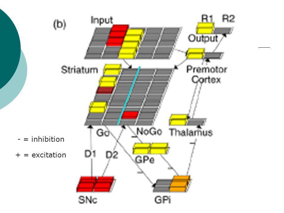 Anciens modèles de réponse Problème: quand il y a des lésions du noyau sous-thalamique, les tremblements des PD diminuent mais il y a des déficits cognitifs.