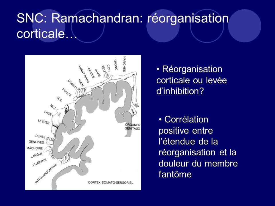 SNC: Ramachandran: réorganisation corticale… Réorganisation corticale ou levée dinhibition? Corrélation positive entre létendue de la réorganisation e