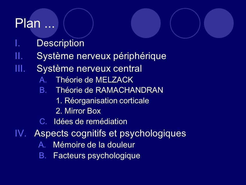 Plan... I.Description II.Système nerveux périphérique III.Système nerveux central A.Théorie de MELZACK B.Théorie de RAMACHANDRAN 1. Réorganisation cor