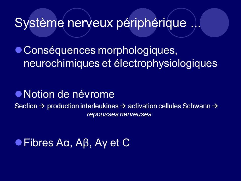 Système nerveux périphérique... Conséquences morphologiques, neurochimiques et électrophysiologiques Notion de névrome Section production interleukine