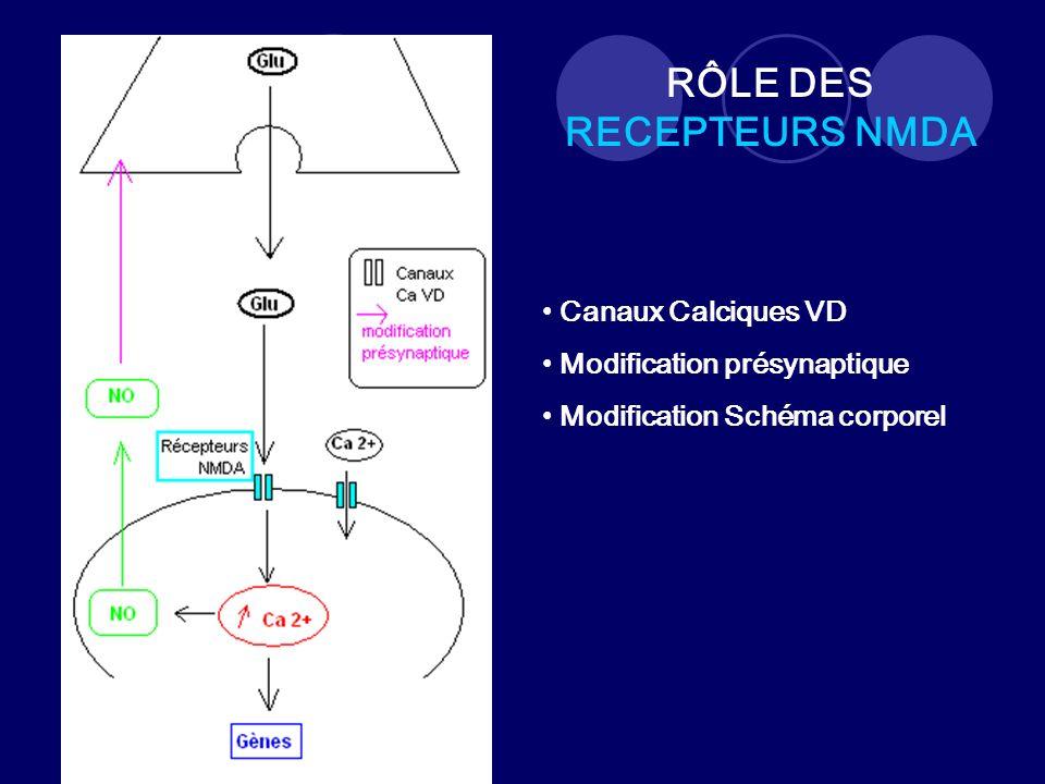 RÔLE DES RECEPTEURS NMDA Canaux Calciques VD Modification présynaptique Modification Schéma corporel