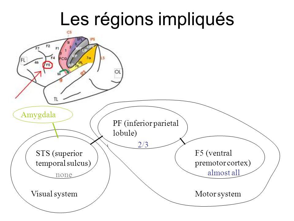 Lévolution de lhomme Le cerveau humain avait atteint sa taille et forme actuelle, il y a 250K ans –Mais, beaucoup des aspects « humains » ont apparu beaucoup plus tard .
