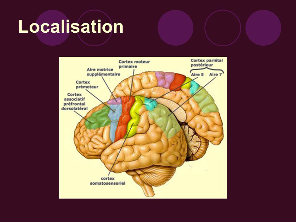 Conclusion Le cortex prémoteur est donc nécessaire à la préparation de tout mouvement volontaire.