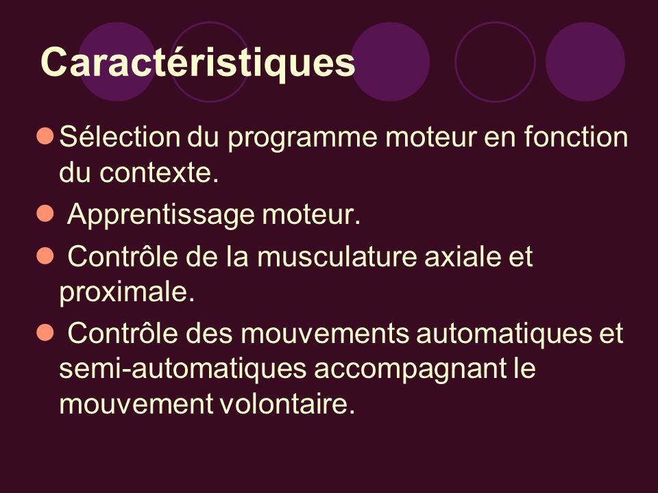 Caractéristiques Sélection du programme moteur en fonction du contexte. Apprentissage moteur. Contrôle de la musculature axiale et proximale. Contrôle