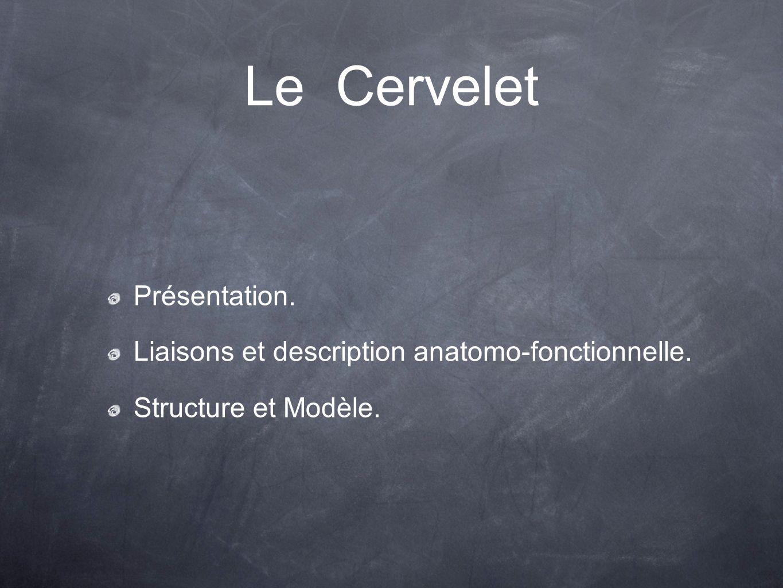 Présentation. Liaisons et description anatomo-fonctionnelle. Structure et Modèle. Le Cervelet