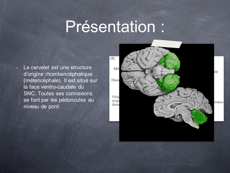 Présentation : Le cervelet est une structure dorigine rhombencéphalique (métencéphale). Il est situé sur la face ventro-caudale du SNC. Toutes ses con