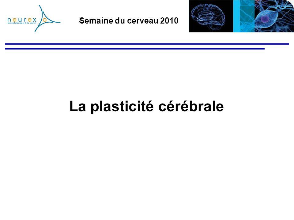 Semaine du cerveau 2010 Sommaire - Introduction - La formation du système nerveux - Les connexions nerveuses - La plasticité - Rôle - Les différentes mémoires - Localisation des mémoires - La plasticité réparatrice chez les mammifères