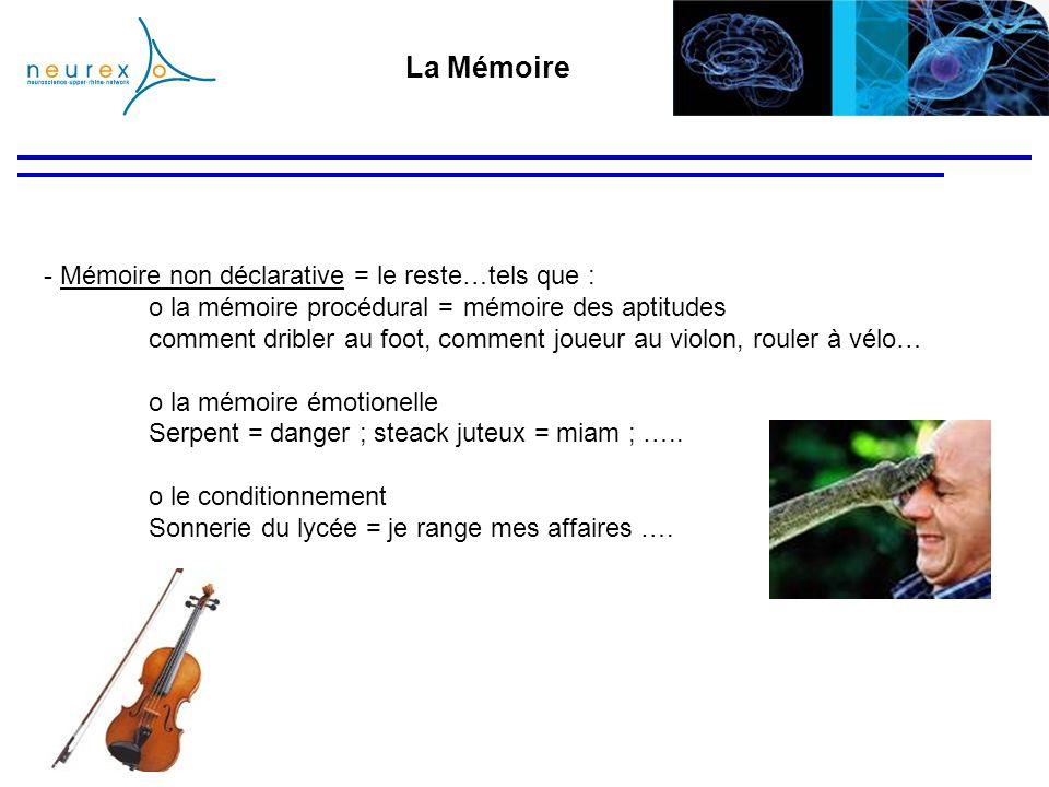 La Mémoire - Mémoire non déclarative = le reste…tels que : o la mémoire procédural =mémoire des aptitudes comment dribler au foot, comment joueur au v