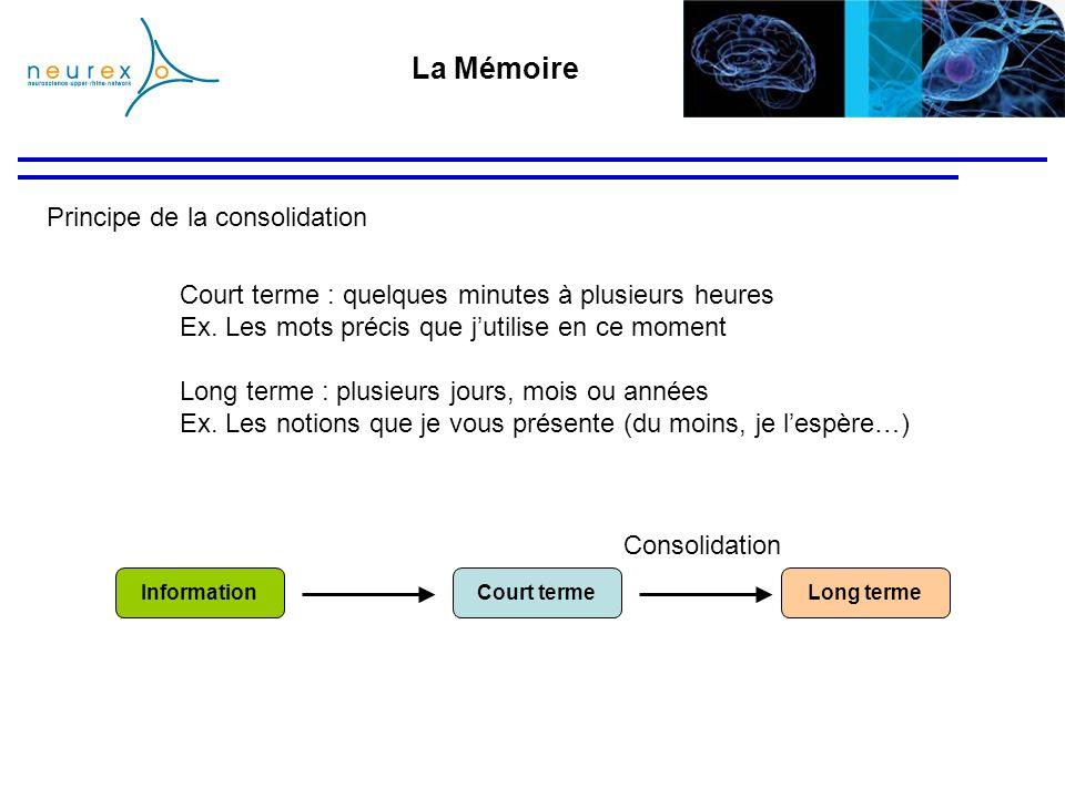 Principe de la consolidation La Mémoire Court termeLong termeInformation Consolidation Court terme : quelques minutes à plusieurs heures Ex. Les mots