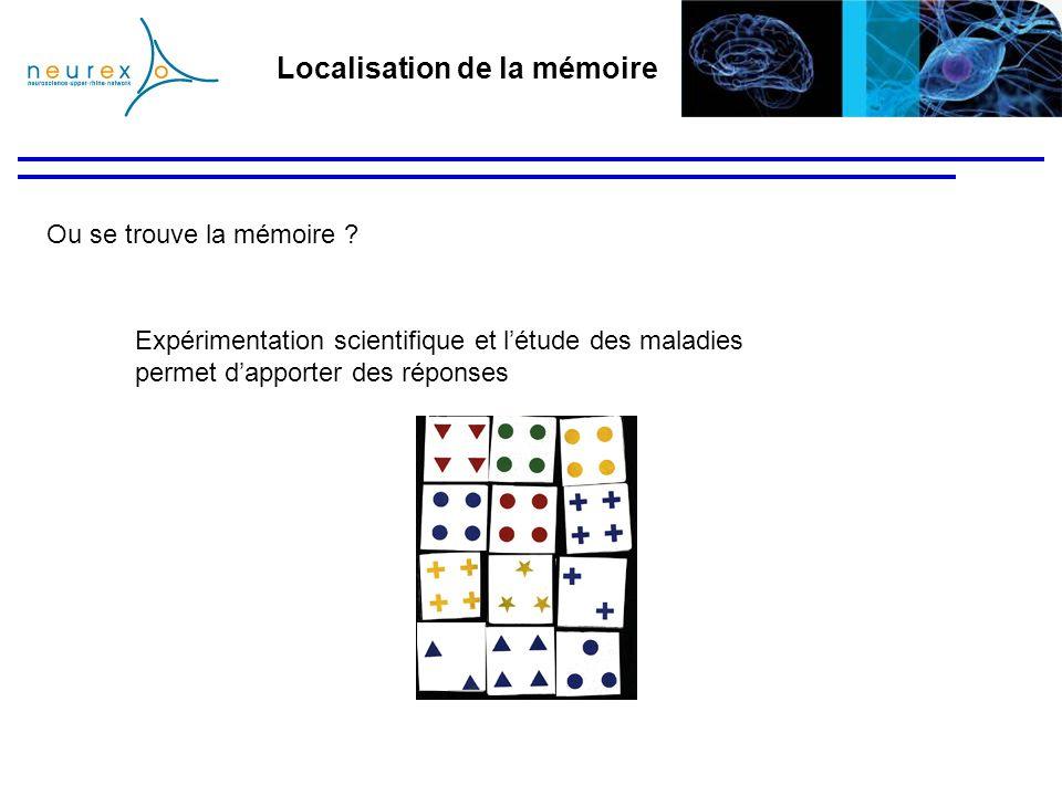 Ou se trouve la mémoire ? Expérimentation scientifique et létude des maladies permet dapporter des réponses Localisation de la mémoire