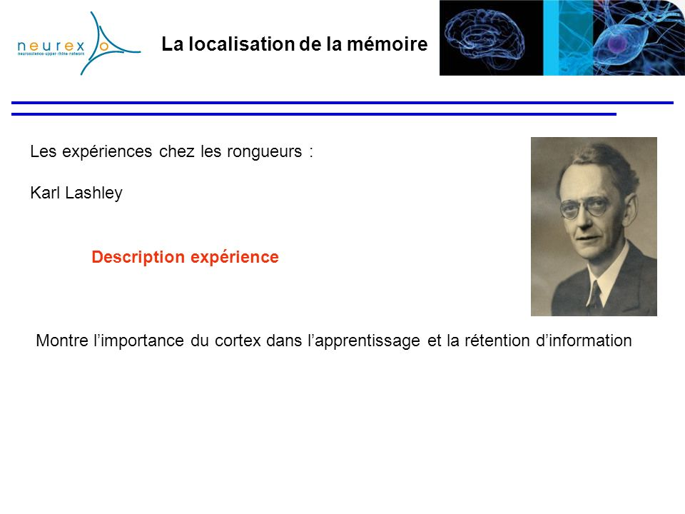 La localisation de la mémoire Les expériences chez les rongueurs : Karl Lashley Montre limportance du cortex dans lapprentissage et la rétention dinfo