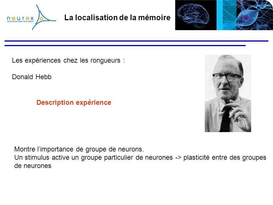 La localisation de la mémoire Les expériences chez les rongueurs : Donald Hebb Montre limportance de groupe de neurons. Un stimulus active un groupe p