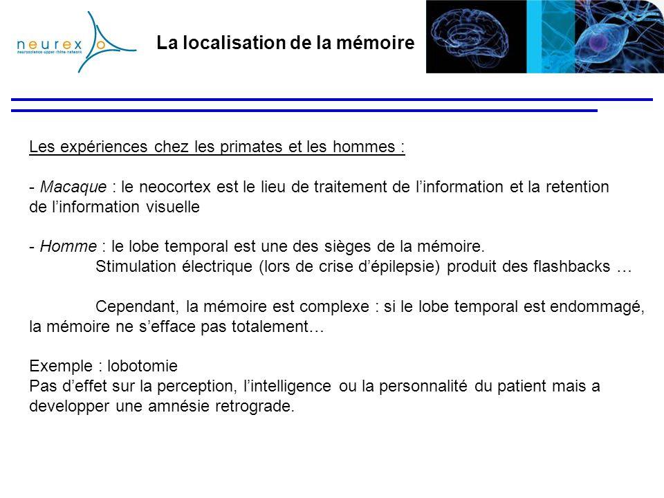 La localisation de la mémoire Les expériences chez les primates et les hommes : - Macaque : le neocortex est le lieu de traitement de linformation et