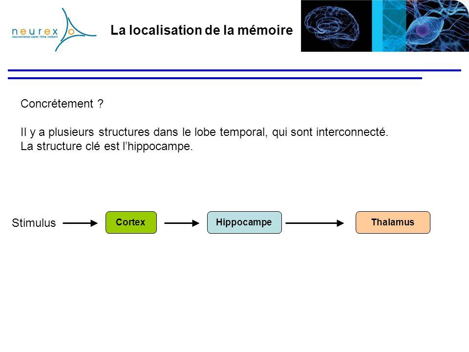 La localisation de la mémoire Concrétement ? Il y a plusieurs structures dans le lobe temporal, qui sont interconnecté. La structure clé est lhippocam