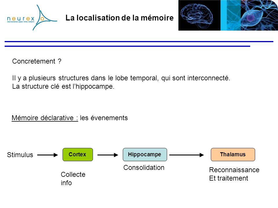 La localisation de la mémoire Concretement ? Il y a plusieurs structures dans le lobe temporal, qui sont interconnecté. La structure clé est lhippocam