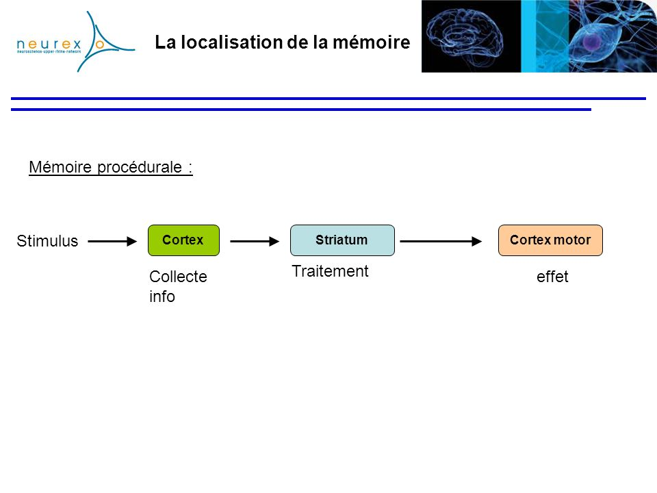 La localisation de la mémoire Mémoire procédurale : StriatumCortex motorCortex Stimulus Traitement Collecte info effet