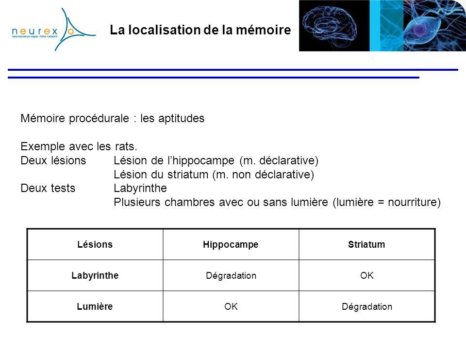 La localisation de la mémoire Mémoire procédurale : les aptitudes Exemple avec les rats. Deux lésions Lésion de lhippocampe (m. déclarative) Lésion du