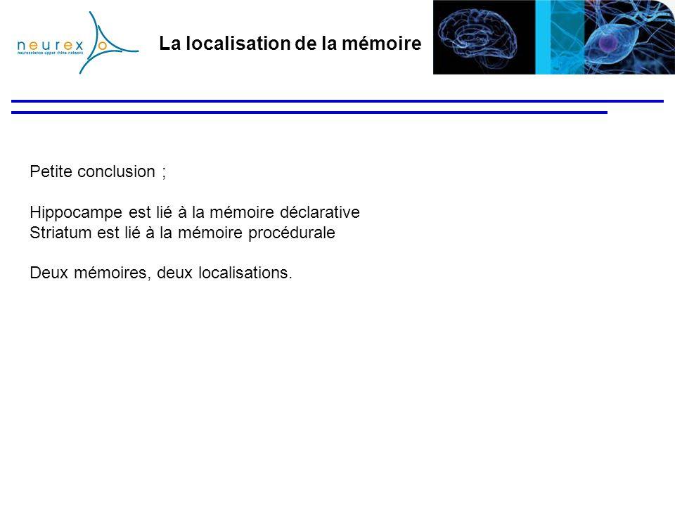 La localisation de la mémoire Petite conclusion ; Hippocampe est lié à la mémoire déclarative Striatum est lié à la mémoire procédurale Deux mémoires,