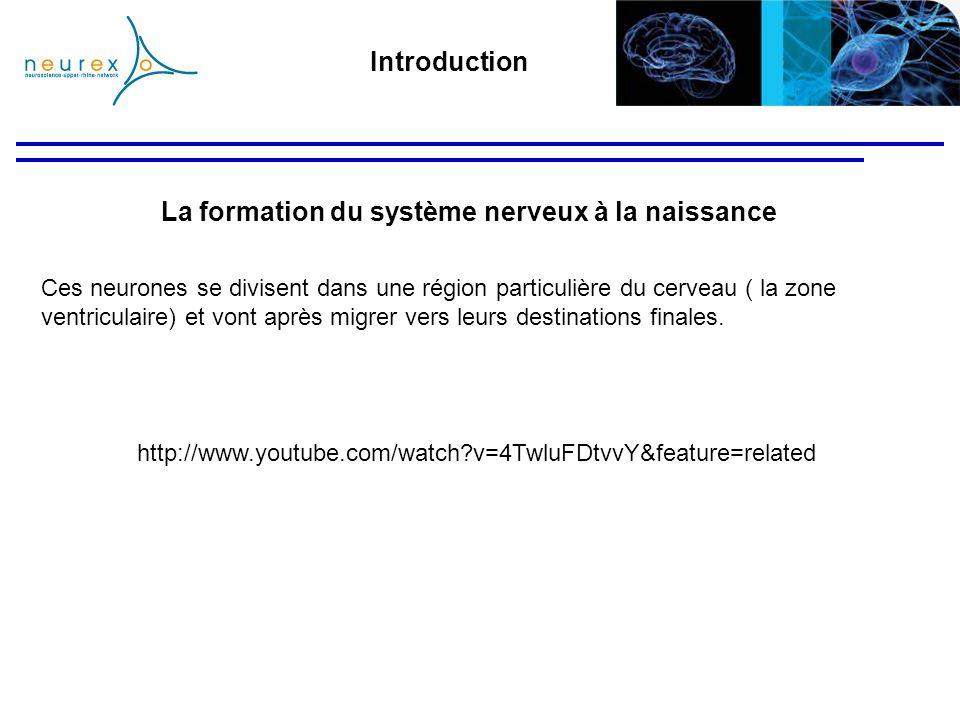 Introduction http://www.youtube.com/watch?v=4TwluFDtvvY&feature=related Ces neurones se divisent dans une région particulière du cerveau ( la zone ven
