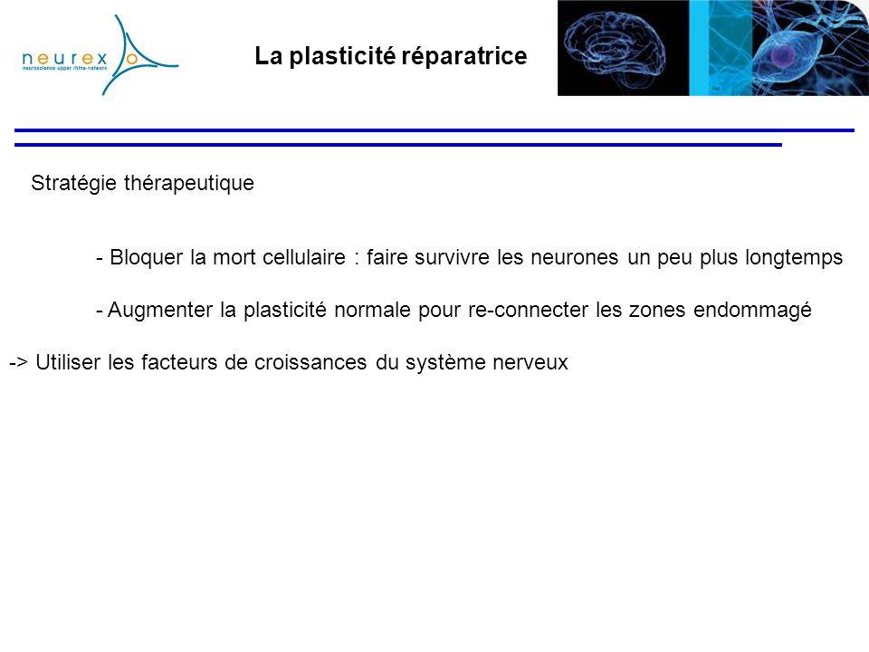 La plasticité réparatrice Stratégie thérapeutique - Bloquer la mort cellulaire : faire survivre les neurones un peu plus longtemps - Augmenter la plas