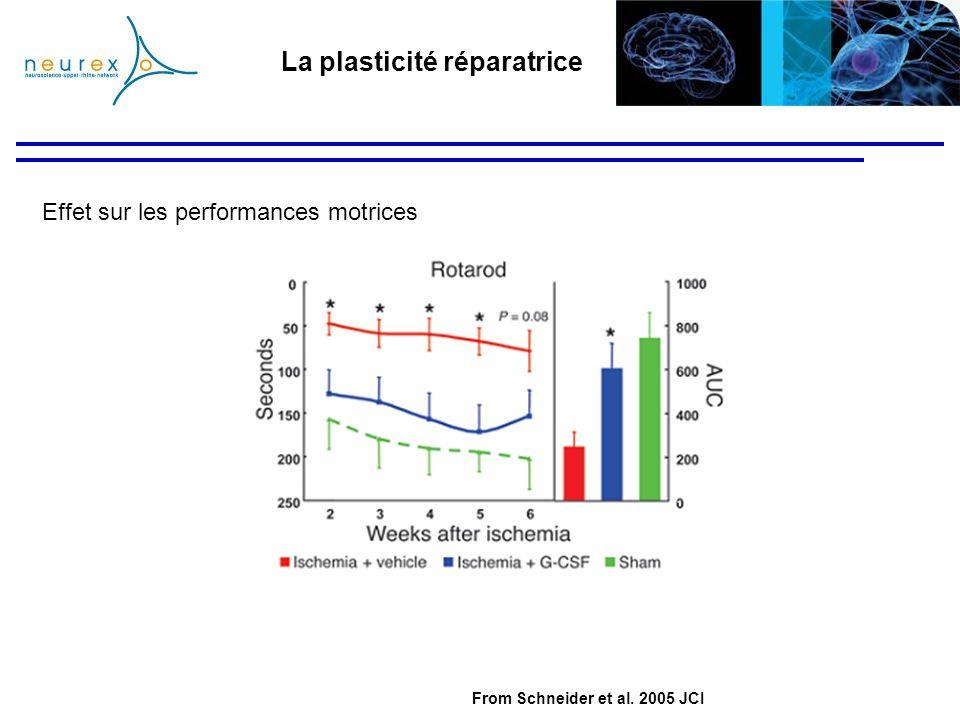 La plasticité réparatrice Effet sur les performances motrices From Schneider et al. 2005 JCI