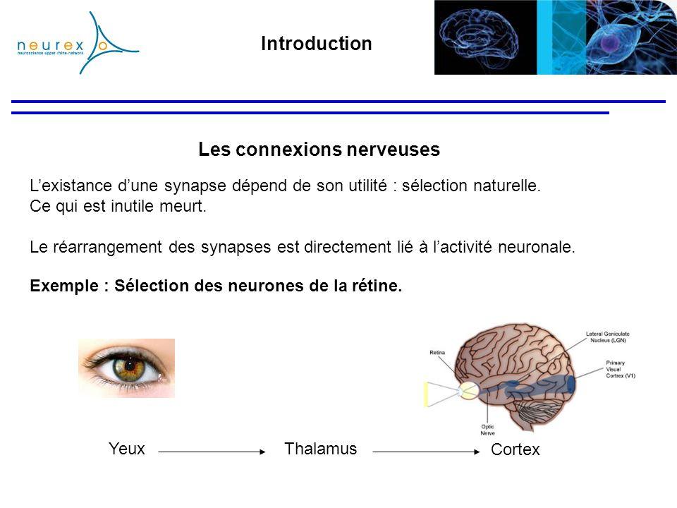 Lexistance dune synapse dépend de son utilité : sélection naturelle. Ce qui est inutile meurt. Le réarrangement des synapses est directement lié à lac