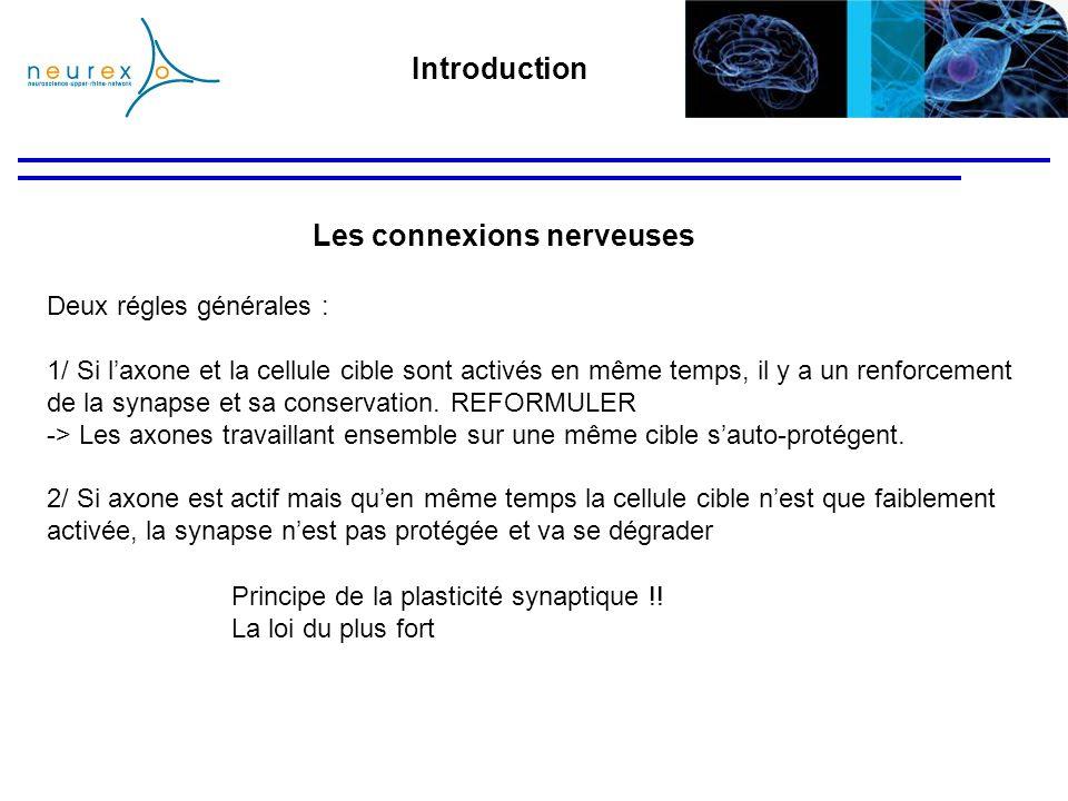 Deux régles générales : 1/ Si laxone et la cellule cible sont activés en même temps, il y a un renforcement de la synapse et sa conservation. REFORMUL