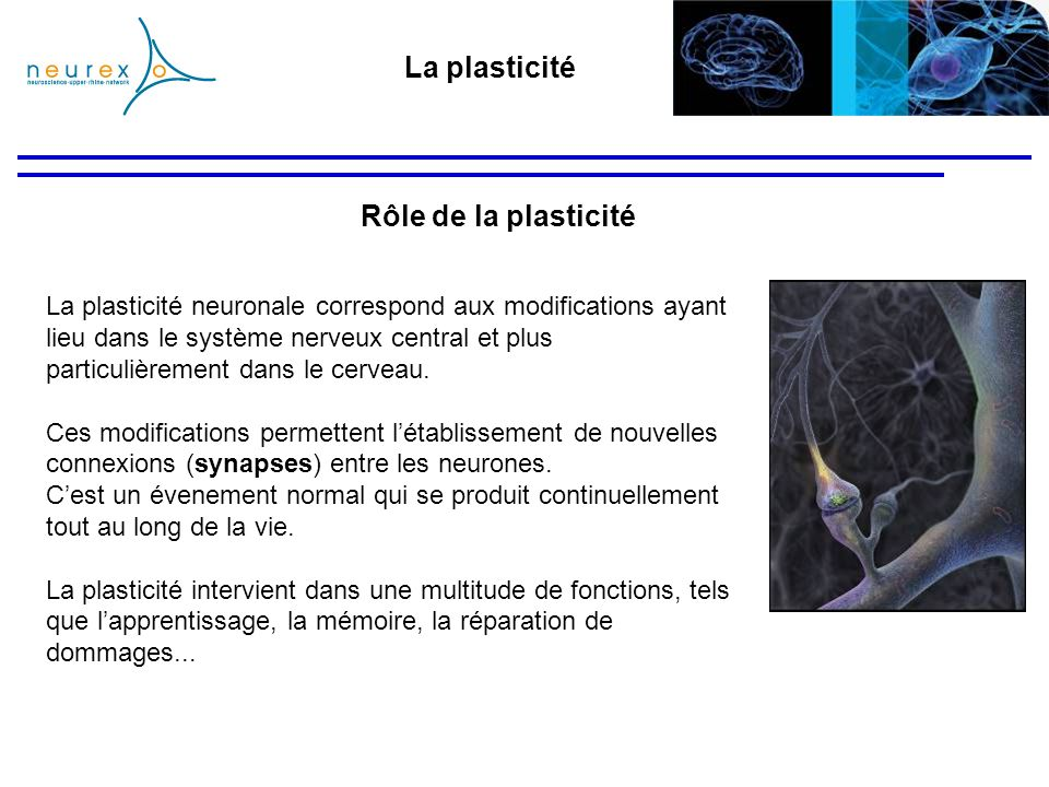 La plasticité neuronale correspond aux modifications ayant lieu dans le système nerveux central et plus particulièrement dans le cerveau. Ces modifica