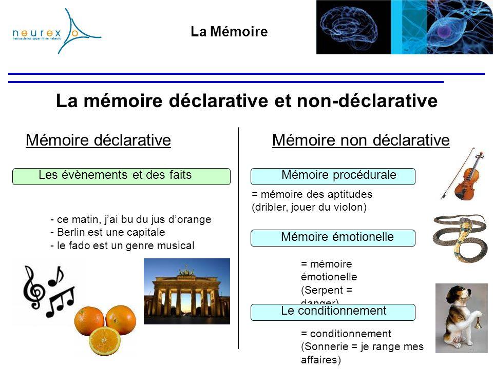 La Mémoire Mémoire déclarative La mémoire déclarative et non-déclarative Mémoire non déclarative - ce matin, jai bu du jus dorange - Berlin est une ca