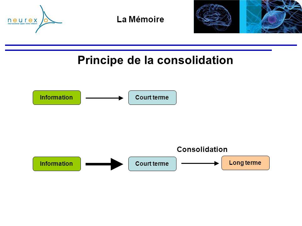 Principe de la consolidation La Mémoire Court terme Long terme Information Consolidation Court termeInformation