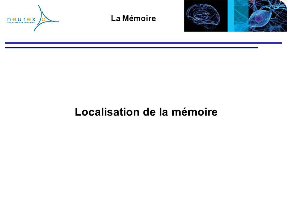 Localisation de la mémoire La Mémoire