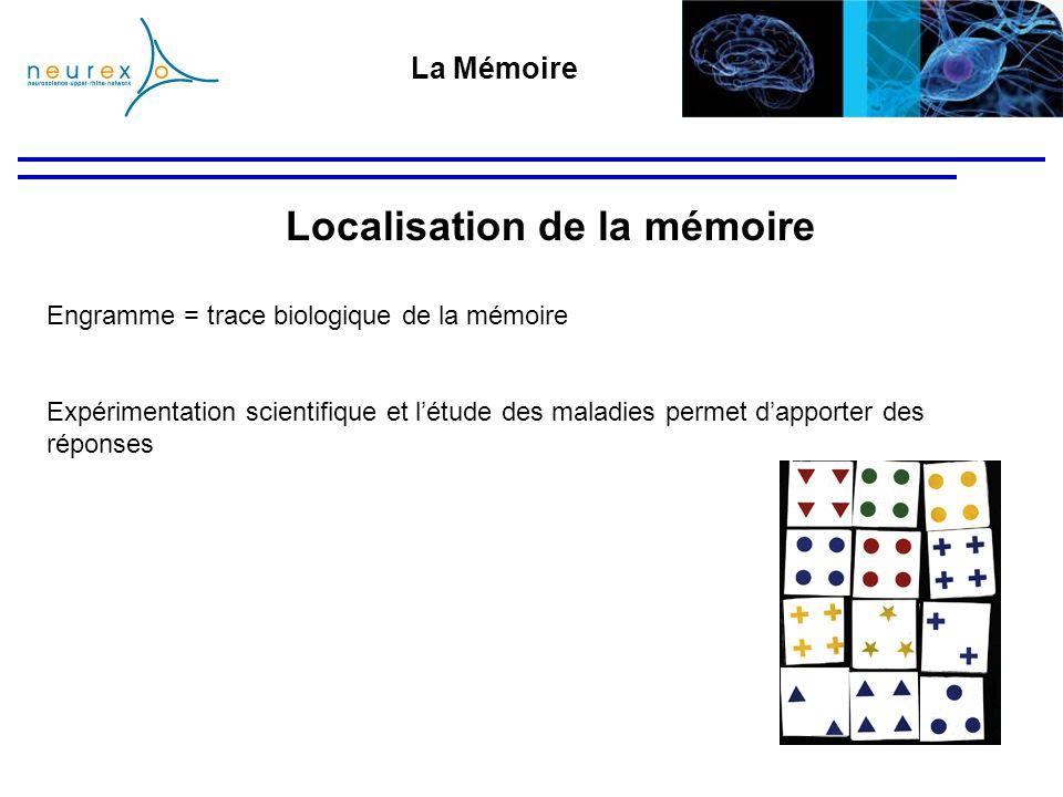 Engramme = trace biologique de la mémoire Expérimentation scientifique et létude des maladies permet dapporter des réponses La Mémoire Localisation de