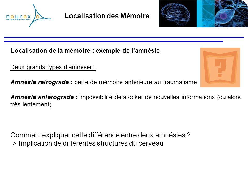 Localisation de la mémoire : exemple de lamnésie Localisation des Mémoire Deux grands types damnésie : Amnésie rétrograde : perte de mémoire antérieur