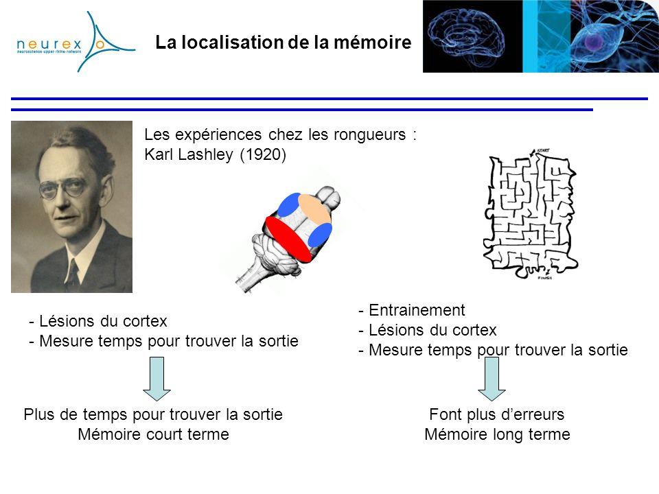 La localisation de la mémoire Les expériences chez les rongueurs : Karl Lashley (1920) Plus de temps pour trouver la sortie Mémoire court terme - Lési