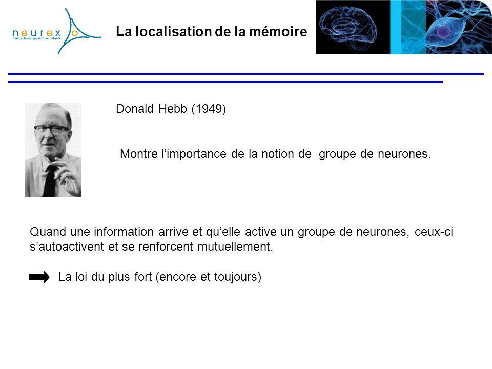 La localisation de la mémoire Montre limportance de la notion de groupe de neurones. Donald Hebb (1949) Quand une information arrive et quelle active