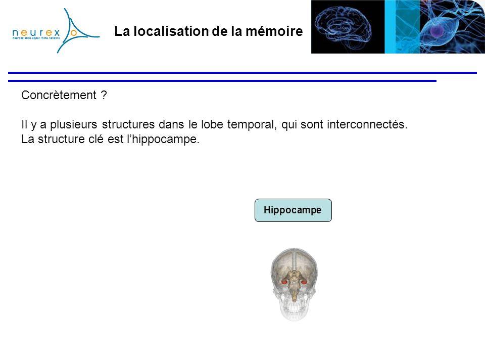 La localisation de la mémoire Concrètement ? Il y a plusieurs structures dans le lobe temporal, qui sont interconnectés. La structure clé est lhippoca