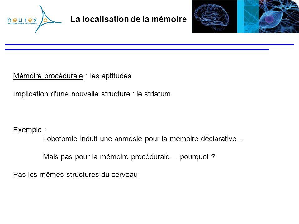 La localisation de la mémoire Mémoire procédurale : les aptitudes Implication dune nouvelle structure : le striatum Exemple : Lobotomie induit une anm