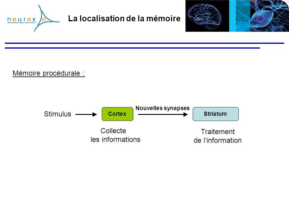 La localisation de la mémoire Mémoire procédurale : StriatumCortex Stimulus Nouvelles synapses Traitement de linformation Collecte les informations