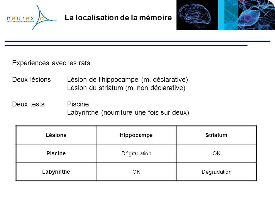 La localisation de la mémoire LésionsHippocampeStriatum PiscineDégradationOK LabyrintheOKDégradation Expériences avec les rats. Deux lésions Lésion de