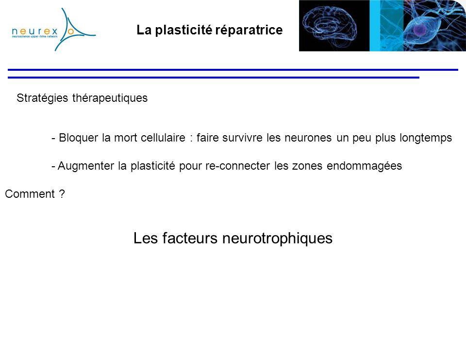 La plasticité réparatrice Stratégies thérapeutiques - Bloquer la mort cellulaire : faire survivre les neurones un peu plus longtemps - Augmenter la pl