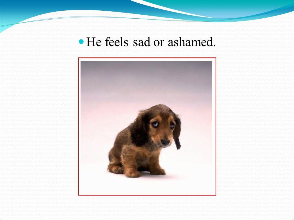 He feels sad or ashamed.
