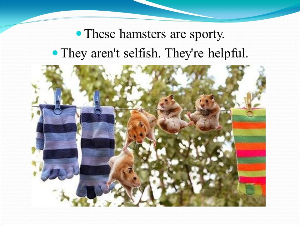 These hamsters are sporty. They aren t selfish. They re helpful.