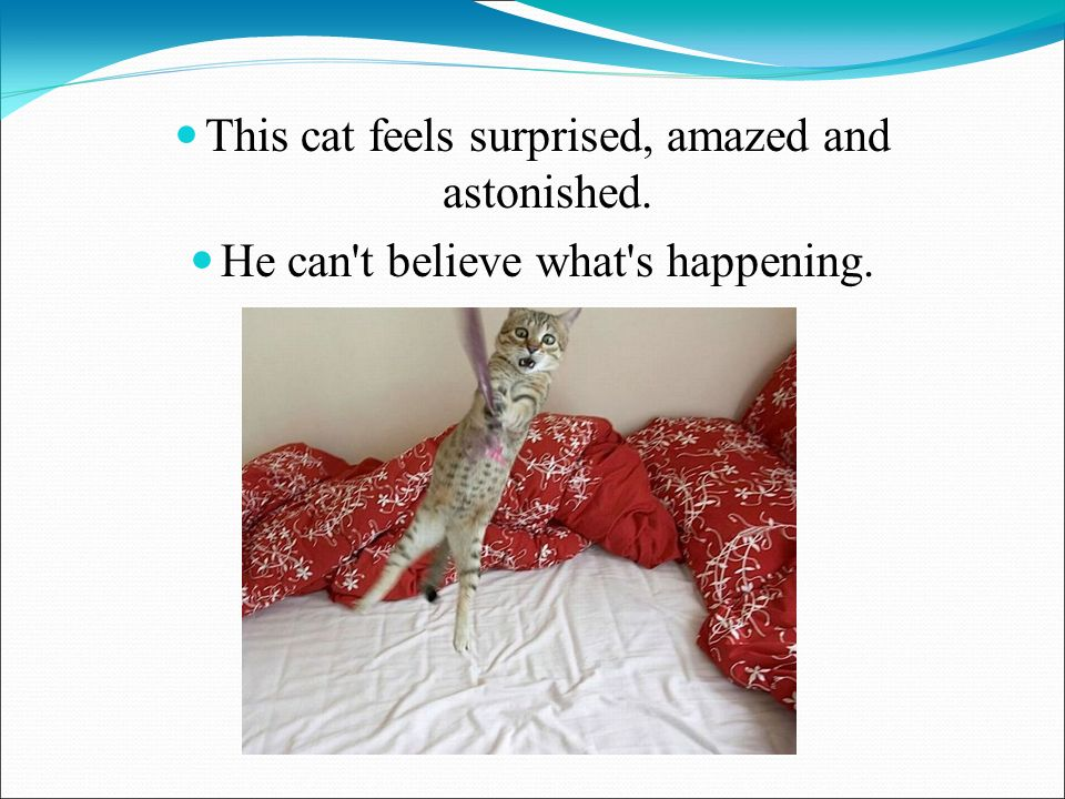 This cat feels surprised, amazed and astonished. He can t believe what s happening.