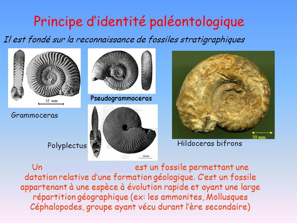 Principe didentité paléontologique Il est fondé sur la reconnaissance de fossiles stratigraphiques Grammoceras Pseudogrammoceras Polyplectus Un fossil