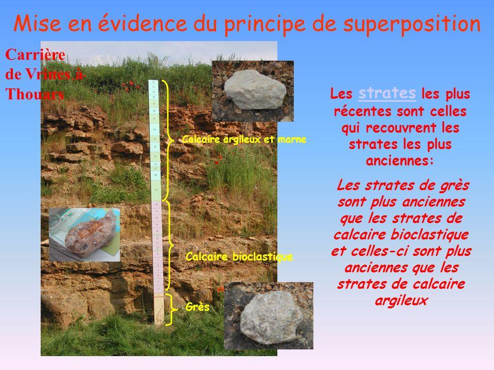 Mise en évidence du principe de superposition Carrière de Vrines à Thouars Calcaire argileux et marne Grès Calcaire bioclastique Les strates les plus