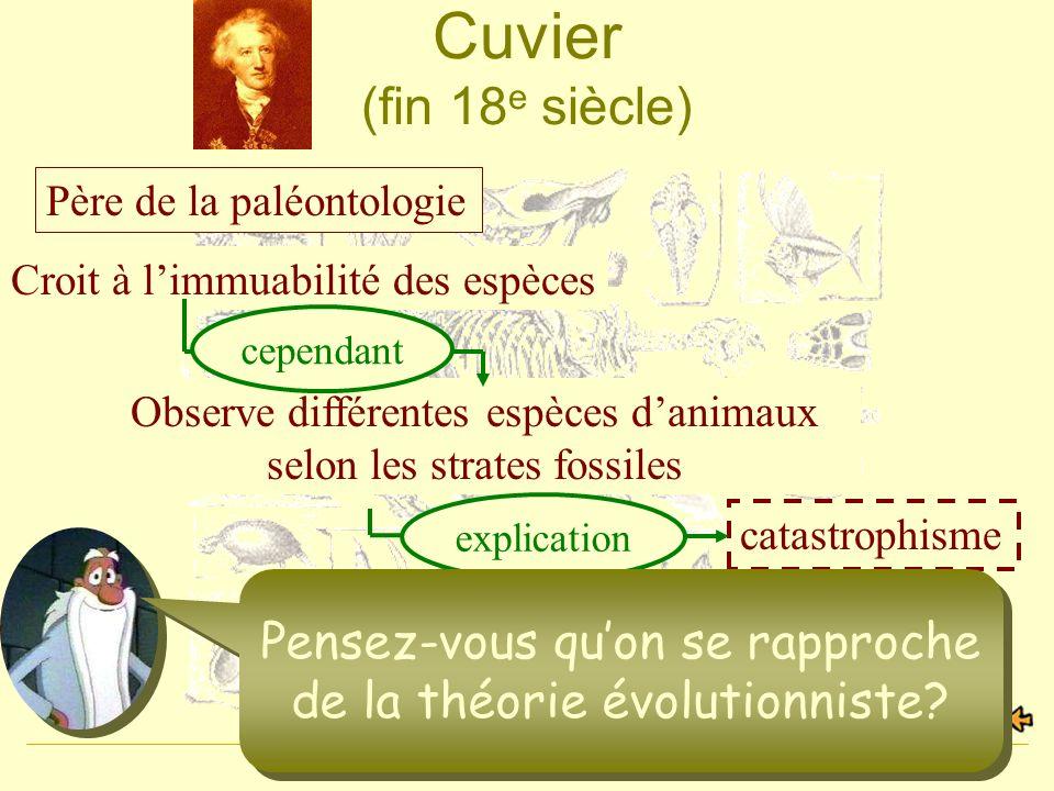6 Cuvier (fin 18 e siècle) Père de la paléontologie Non, les espèces sont fixes et immuables Croit à limmuabilité des espèces catastrophisme Observe d