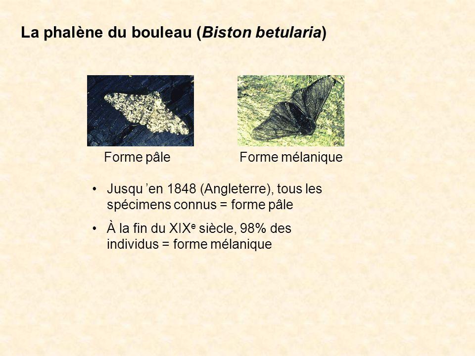 La phalène du bouleau (Biston betularia) Forme pâle = bon camouflage sur les troncs darbres couverts de lichen.