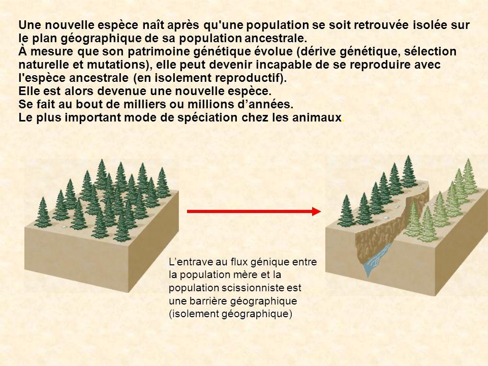 Une nouvelle espèce naît après qu'une population se soit retrouvée isolée sur le plan géographique de sa population ancestrale. À mesure que son patri