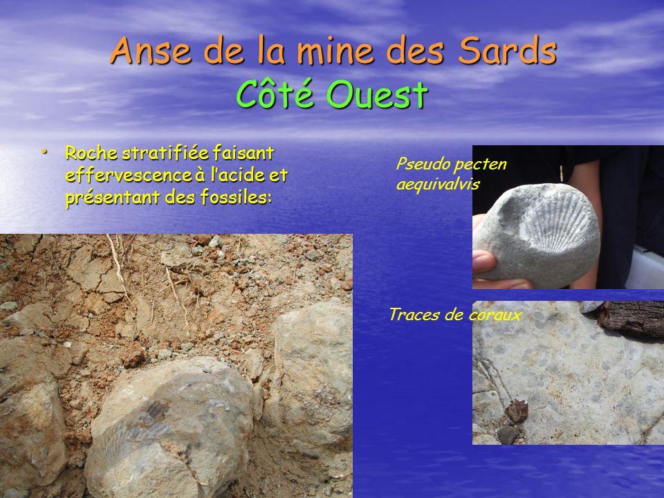 Anse de la mine des Sards Côté Ouest Roche stratifiée faisant effervescence à lacide et présentant des fossiles: Roche stratifiée faisant effervescenc